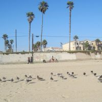 Birds in Huntington Beach, Хантингтон-Бич
