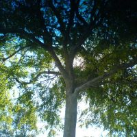 A Tree in the Parking Lot., Черриленд