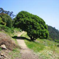 Hillside Natural Area, Эль-Серрито