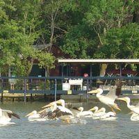 Pelican Migration, Андовер