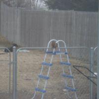 back yard, Додж-Сити