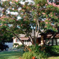 Mimosa Tree - 322 South Oliver, Истборо