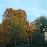 Autumn Tree - Leavenworth, Ливенворт