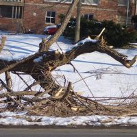 Tree & Limbs damaged from weather - dragon face from the side, Kansas City, KS, Овербрук