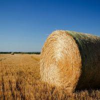 Hay bale (Biomass Haddam), Палмер