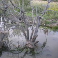 Tree in water, Парк-Сити