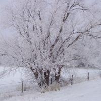 12-2003 ice storm, Парк-Сити