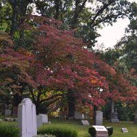 Red Tree, Лексингтон