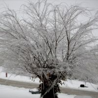 2009 Ice storm in Mt.Sterling, Ky., Маунт-Стерлинг