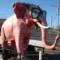 The Pink Elephant, Трентон