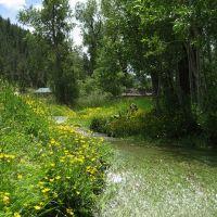 spring runoff through the long green grass, Айдахо-Спрингс