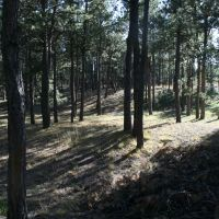 Black Forest CO, Блэк-Форест
