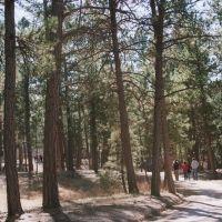 Walking through the Black Forest, Блэк-Форест