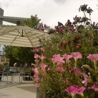 Belmar Flowers & Mod Umbrella, Лейквуд