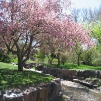 spring & stream beauty, Лейквуд
