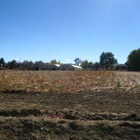 a suburban farm in Wheat Ridge, Лейксайд
