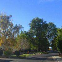 a fall weeping willow, Лейксайд
