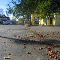 fallen apples, Лейксайд