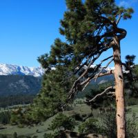 Flag Tree, Upper Beaver Meadows, Rocky Mountain National Park, Нанн