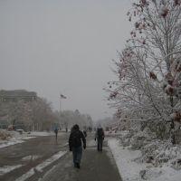 Snowy Plaza..., Форт-Коллинс