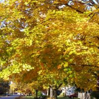 Fall in Manchester, Манчестер