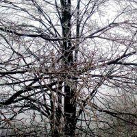 Icy trees, Милфорд