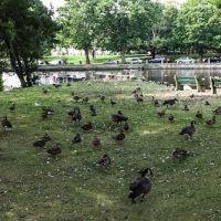 Upper Duck Pond, Милфорд
