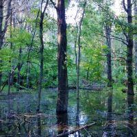 Lamentation Mountain Conservation Area, Невингтон