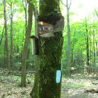 Sign-eating tree N of Mt. Higby near Tynan Park - May 14 2010, Невингтон