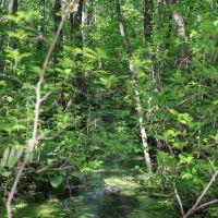 Red Maple Swamp, Роки-Хилл
