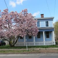 Pink Tree, Blue House, Стратфорд