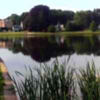 Longbrook Park Pond, Стратфорд