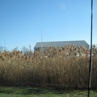 Marsh Grass, Стратфорд