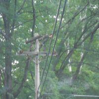 Old CL&P Buckarm Pole, Торрингтон