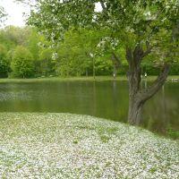 Spring, Уотербури