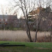 Backyard Marsh, Файрфилд