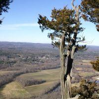Tree on Talcott Mountain, Фармингтон