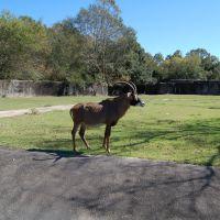 Baton Rouge Zoo, Бейкер