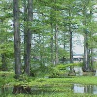 Cypress Swamp, Бланчард