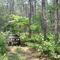 Kisatche Nation Forest - Calcasieu RD, Evageline District, Вудворт