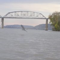Great Blue Heron and Champ Clark Bridge, Де-Риддер