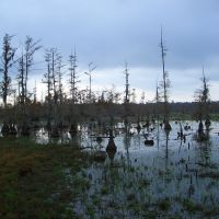 lake iatt - louisiana, Джексон