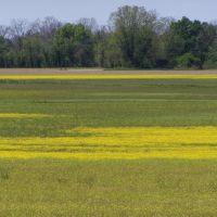 Louisiana Field, Джексон
