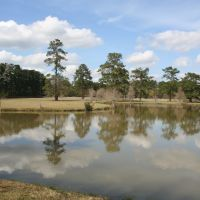 Pond, Ковингтон