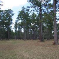 Northern Property Pines, Ковингтон
