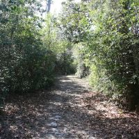 Trail, Ковингтон