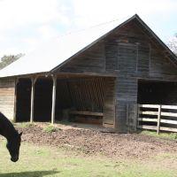 Horse Shelter, Ковингтон