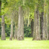 Trees in Park, Ковингтон