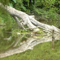 Reflections, Ковингтон