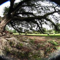 oak roots, Марреро